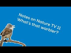(524) Notes on Nature TV 11: Beginner's guide to warblers - YouTube Tv 11, Wild Ones, About Uk, Notes, Birds, Nature, Youtube, Report Cards, Naturaleza