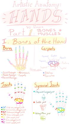 Lemoro on tumblr- hand anatomy