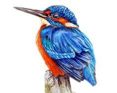 Kingfisher Art Print, Kingfisher Painting, Home Decor, Wall Art, Watercolour Print, Watercolour Bird Painting, Bird Illustration, Gift Ideas