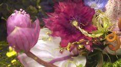 앤트워프 외각에 큰 정원을 소유하고 있을 정도로 꽃을 사랑하는 드리스 반 노튼의 2017 S/S 컬렉션 기억 하시나요? 식물 조각가로 불리는 아즈마 마코토의 손길을 거쳐 얼음 조각 안에 꽃들이 가득 채워져 런웨이를 보다 신비롭게 만들었던 아이스 플라워 큐브가 제작 되는 과정을 보세요. - #HarpersBAZAAR #driesvannoten #드리스반노튼 #flower #플라워 #2017SS #azumamakoto @azumamakoto . RG @driesvannoten  via HARPER'S BAZAAR KOREA MAGAZINE OFFICIAL INSTAGRAM - Fashion Campaigns  Haute Couture  Advertising  Editorial Photography  Magazine Cover Designs  Supermodels  Runway Models