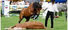 Actualité cavalier cheval & équitation : Une vidéo pour bien commencer la semaine avec Honza Blaha