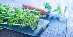 Majoránka je krásnou a voňavou léčivkou Korn, Parsley, Herbs, Herb, Medicinal Plants