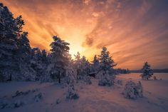 Morning Light - null