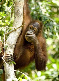 Palm oil facepalm