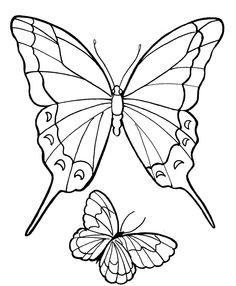 Two Butterflies Flying High