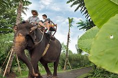 Bali zoo elephant ride is located in Sukawati area. It takes abour 15 minutes from Ubud and 30 minutes from Denpasar area Bali Tour Packages, Elephant Ride, Bali Holidays, Jimbaran, Denpasar, Ubud, Holiday Destinations, Places To Visit, Tours