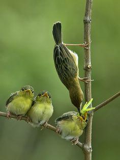 Warbler - Mother Love