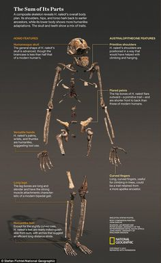 Is this the first human? Extraordinary find in a South African cave suggests man…