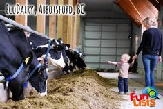 Fun Things to Do in Abbotsford