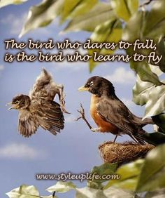 The bird who dares to fall, is the bird who learns to fly