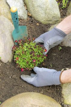 Soil For Rock Gardens: Information On Mixing Soil For Rock Gardening. This article has a lot of basic rock gardening info besides soil mixing.