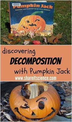 Share it! Science News : Discovering Decomposition with Pumpkin Jack. Activity and free printable observation sheet. Fourth Grade Physical Science Fall Preschool Activities, Stem Activities, Halloween Activities, Kindergarten Science, Nature Activities, Preschool Education, Gifted Education, Thanksgiving Activities, Halloween Science