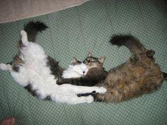 Cutest Sleeping Position