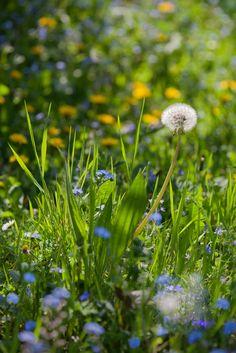 Wildflowers, Dorset