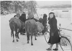 Evacuating on the Carelian Isthmus on People near the border had to evacuate their animals and belongings several times during Rajaseudun väki pakkasi omaisuutensa moneen kertaan vuosina Kuvassa evakuointia Kannaksella History Of Finland, Night Shadow, Fight For Us, My Land, Women In History, World War Two, Ww2, Fairy Tales, Mystery