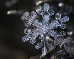 Pretty much the most amazing photographer I've ever come across!!!    realsnowflakephotography.com