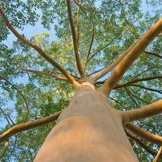 Arbre qui pousse vite : notre top 10 des arbres à croissance rapide Decoration, Gardens, Tree Garden, Fruit Garden, Potager Garden, Fast Growing Trees, Garden Landscaping, Plant, Decor