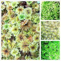 Moss of NZ