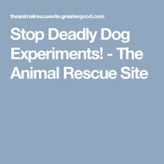 Stop Deadly Dog Experiments! - The Animal Rescue Site
