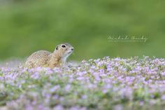 Canon, Wildlife, Bird, Nature, Photos, Photography, Animals, Instagram, Self