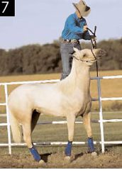 Teach your horse to let you mount from a fence with Clinton Anderson