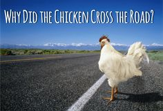 Why Did the Chicken Cross the Road? No prep, easy to play and lots of action! #stumin #groupgames