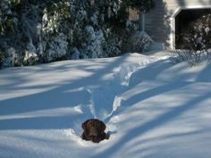 Sne Plow