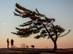 At Killbear Provincial Park in Ontario, visitors can camp along the scenic shores of Georgian Bay, one of Canada's 50 Places of a Lifetime and today's Travel Photograph by Chris Rainier, National Geographic Tree Photography, Photography Tricks, Ontario Parks, 365 Photo, Lake Huron, Tree Forest, Ciel, Landscape Art, Day Trips