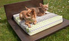 Stylish Modern Dog Beds