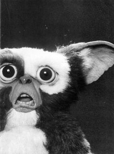 I'm going to start sending this to people randomly through text. Because it's Gremlins and Gizmo's face is awesome
