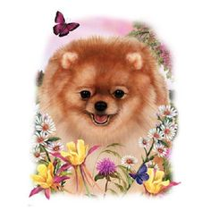 Pomeranian T SHIRT, Dog T-Shirt, Floral Dog T SHIRT, (Also Available) Pomeranian Dog Sweatshirt, Tote Bag, Quilt Fabric Block  893f by AlwaysInStitchesCo on Etsy