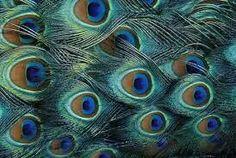 Eyes watching you.....