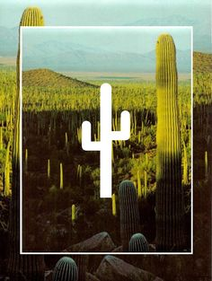 Cactus | #Layout