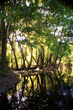 #springs #florida #photography #landscape