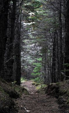 Cow Head Trail, Newfoundland  photo by: Marie-Laure Even