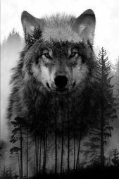 Check our website for amazing wolf tattoo designs and other tattoo ideas. Wolf Tattoo Forearm, Wolf Tattoo Sleeve, Best Sleeve Tattoos, Wolf Tattoo Back, Tattoo Wolf, Wolf Tattoo Design, Tattoo Designs, Wolf Images, Wolf Pictures