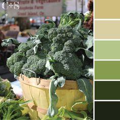Color Palette Ideas    www.colorandspiceblog.com