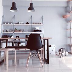 Reikoさんの、北欧好き,本棚,マンション,猫ハウス,照明,IKEA,ねこのいる風景,ねこ,猫,このは君,ねこのいる日常,塩系インテリア,ダイニングテーブル,イームズシェルチェア,モノトーン,ベンチ,ディスプレイ棚,キャットタワー,スツール,部屋全体,のお部屋写真