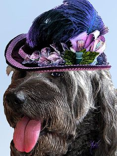 Labradoodle Trudy To The Derby, mixed media painting by Michele Avanti   Trudy the labradoodle is decked out in her fancy purple feathered hat complete with pink ribbons waiting for the Kentucky Derby to begin. It is a hot day and though she has already had three mint juleps, she pants a little as the puparazzi take her picture.