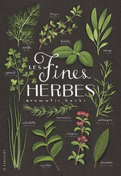 Fines herbes - Aromatics Culinary herbs bilingual print - Botanical collection via Etsy Illustration Herbes, Menu Illustration, Healing Herbs, Aromatic Herbs, Botanical Prints, Herb Garden, Herbalism, Plant Leaves, Typography