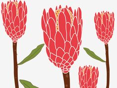 Connect with them on Dribbble; Protea Art, Protea Flower, Botanical Wall Art, Botanical Prints, Art Floral, Australian Flowers, Color Script, Nature Sketch, Laser Art