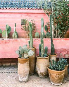 Des cactus sur un mur rose photographiés par @carlaypage