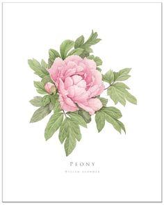 Dark Pink Peony by EllenBlonderStore on Etsy, $30.00