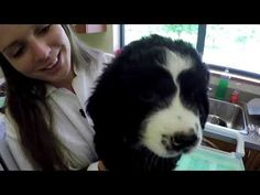 La pouponnière de la Fondation Mira - YouTube Dogs, Animals, Animales, Animaux, Doggies, Animal, Animais, Dieren, Pet Dogs