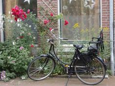 Black bike against roses, Amsterdam