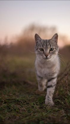 portrait of a country cat