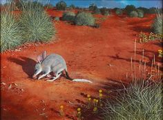 William T. Cooper - Bilby William cooper is an amazing Australian artist such a perfectionist and stunning art work Bird Drawings, Animal Drawings, Drawing Animals, European Map, Feral Cats, Australian Artists, Art Auction, Art Images, Mammals
