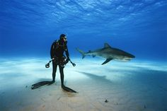 Epic Shark Diving, Bahamas Photography By: Brian Skerry