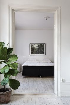 Stockholm Interiors | Bedroom Inspo | Minimal | Fig Tree Plant Life | Art | High Ceilings | HarperandHarley