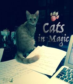 Cats in Magic,  Witches' Beloved familiars & kindred spirits legends and magical correspondences